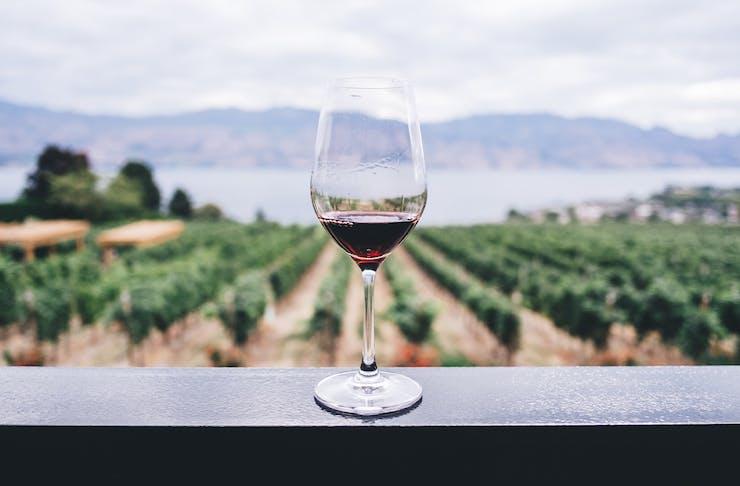Wineries Near Brisbane