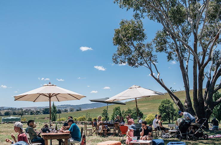 A charming country winery set on a sprawling paddock.