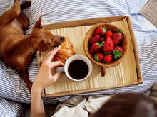 World's Best Dog Friendly Hotels