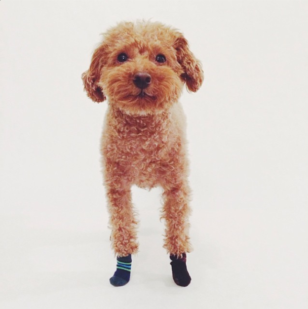 Dogs to Follow on Instagram