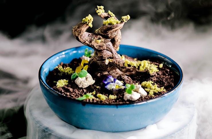 an intricate chocolate bonsai dessert