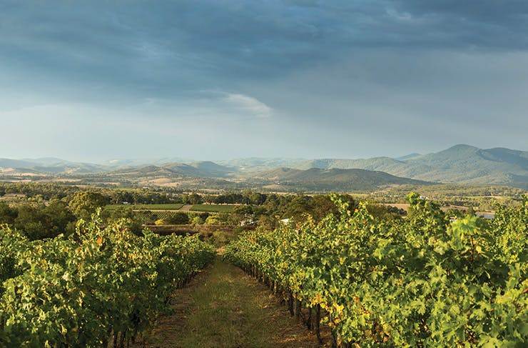 Everything Worth Eating, Seeing, And Doing In The Yarra Valley