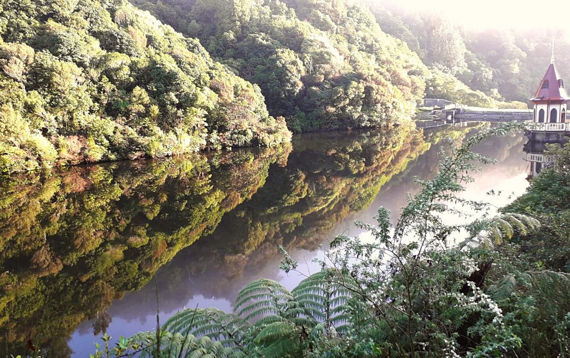 Reflection of the bush on Zealandia Sanctuary lower lake. Breathtaking...