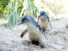 Say Hello To The Residents Of Melbourne Zoo Through Their 24 Hour Live Stream