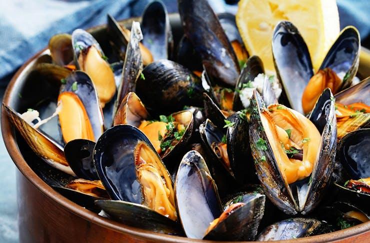 bay of islands best restaurants