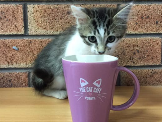 The Cat Cafe Subiaco, Cat Cafe Perth, Subiaco Cafe, Perth Coffee