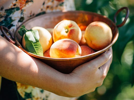It's Plucking Great | Where To Go Fruit Picking Near Sydney