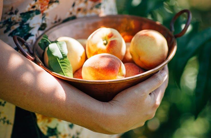 fruit-picking-sydney