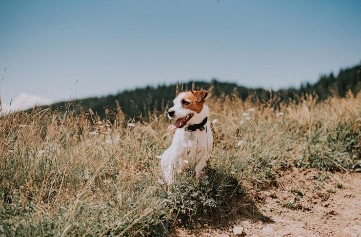 dog sitting on side of walk