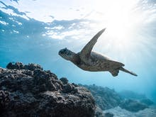 Listen Up, Here's How To Celebrate World Oceans Day From Home