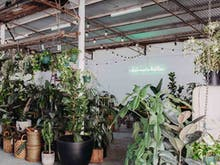 Grab Your Furry Friends, A Pups, Plants And Pizza Party Is Happening