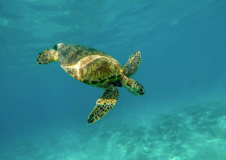Why You Need To Plan Your Next Holiday At This Island Turtle Sanctuary