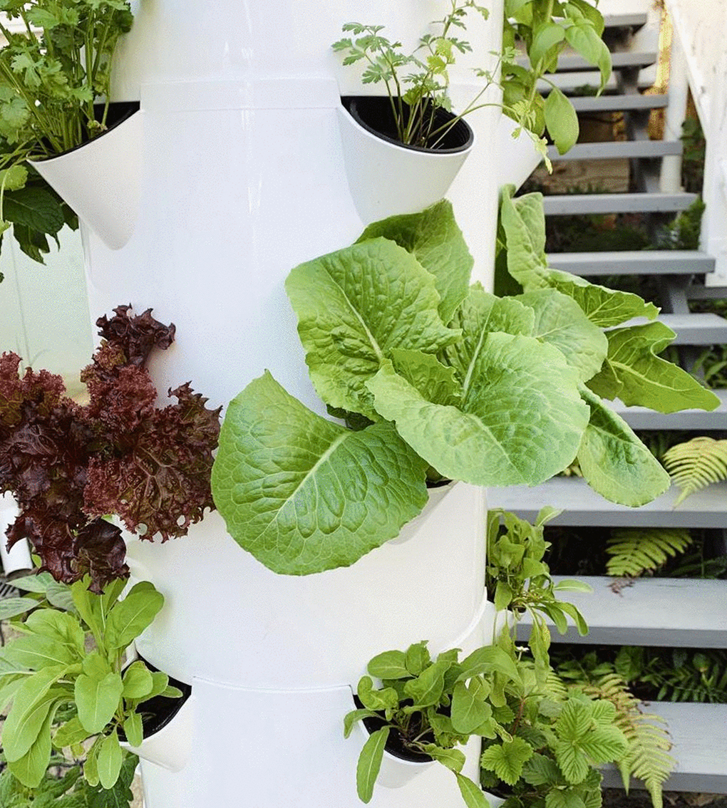 sustainable airgarden growing fresh produce
