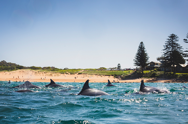 dolphin fins at beach