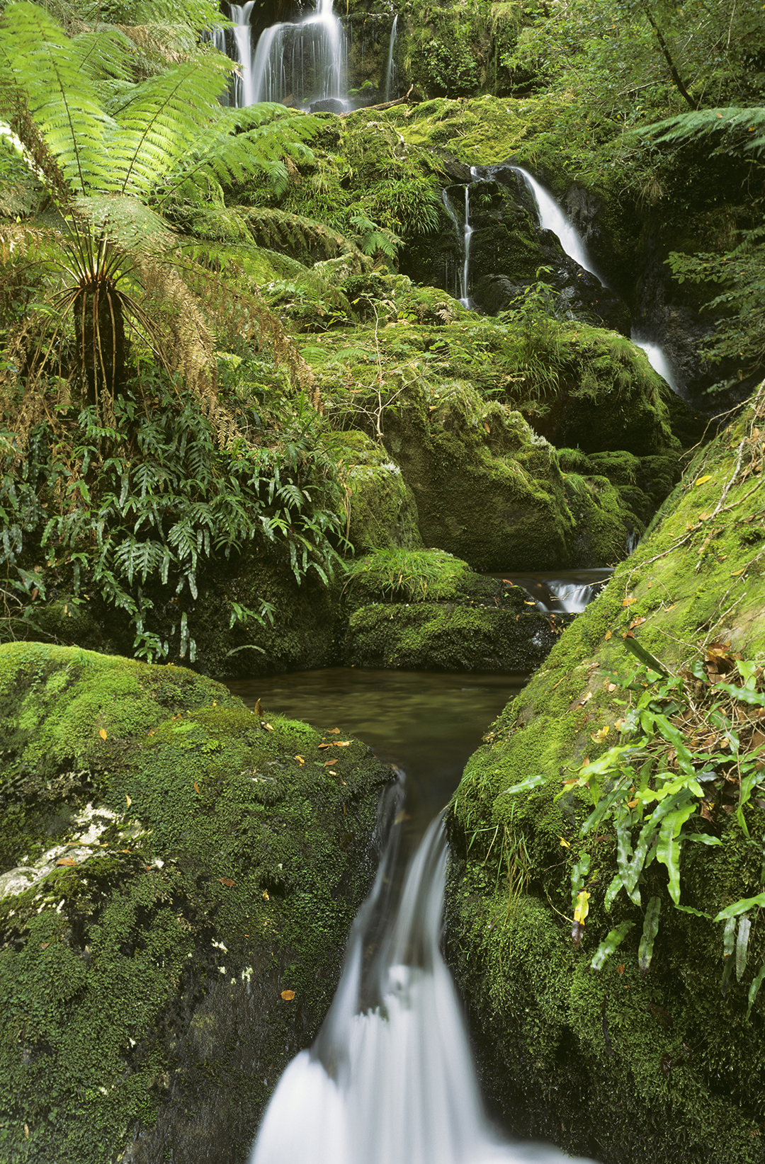 waterfall gully area of barrington tops national park