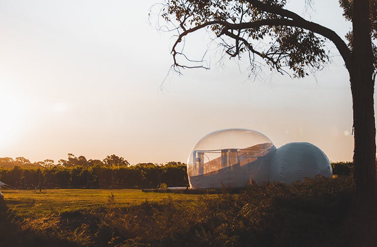 bubble tent located under tree in vineyard