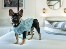 Take Your Best Friend On A Staycation, These Are The Fanciest Dog-Friendly Hotels In Sydney