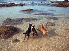 Lead The Way, Here Are The Best Dog-Friendly Things To Do In Sydney