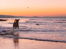 12 Of The Best Dog-Friendly Walks In And Around Sydney