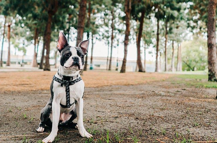 Best Dog Friendly Walks In And Around Sydney Sydney The Urban List