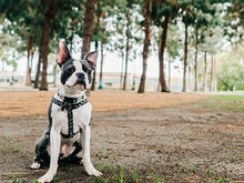 The Best Dog-Friendly Walks In And Around Sydney