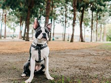 The Best Dog-Friendly Walks In And Around Sydney