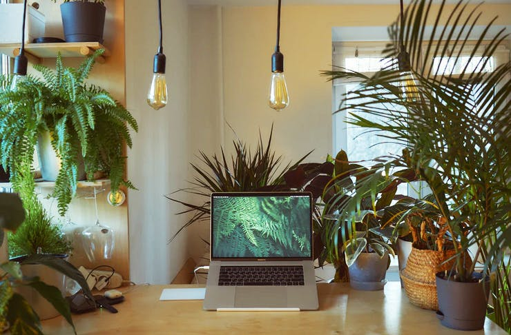 desk with lots of plants and laptop on it