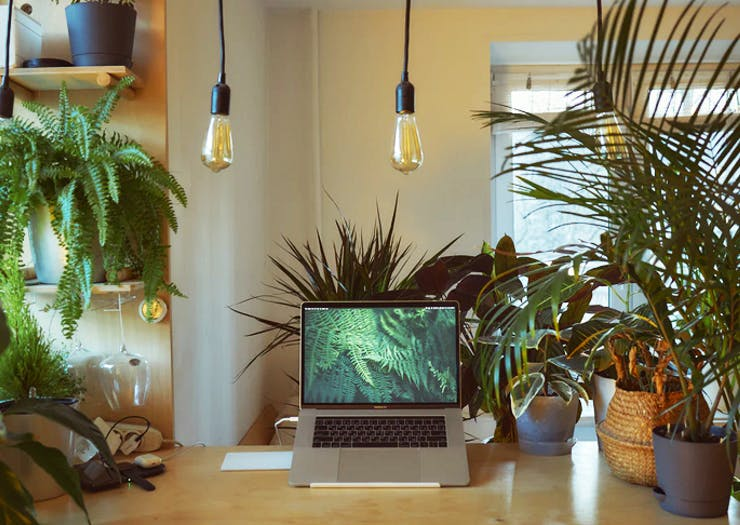The Best Plant Delivery In Sydney To Transform Your Space Into A Jungle Escape