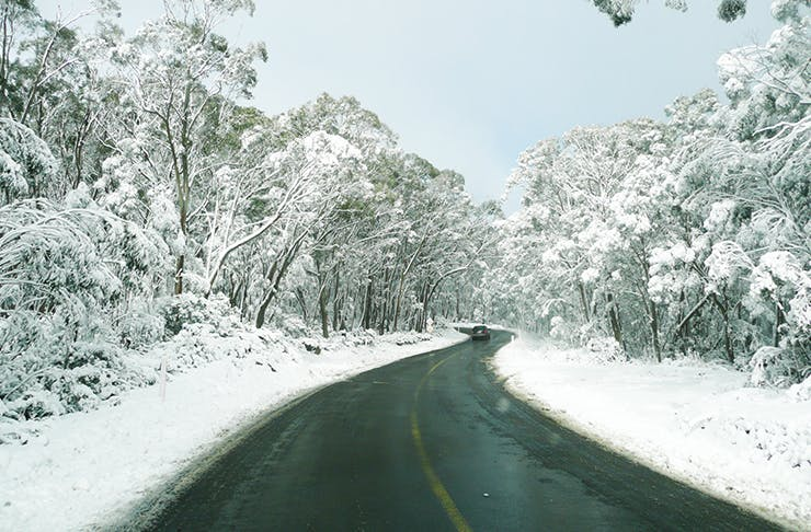 snow covered road leading into snow national park