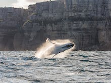 14 Prime Whale Watching Spots To Hit In NSW This Winter