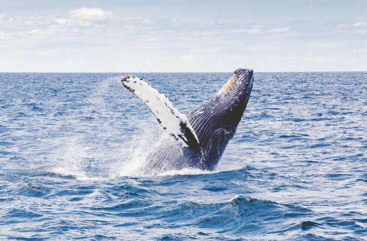 The 8 Best Places To Go Whale Watching Around The World