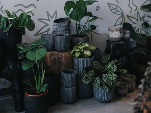 The Borrowed Nursery | Tugun