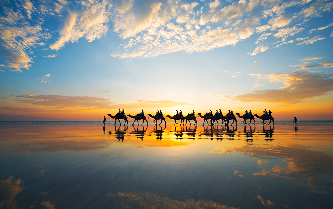 a line of camels walks along a beach in broome at sunset.