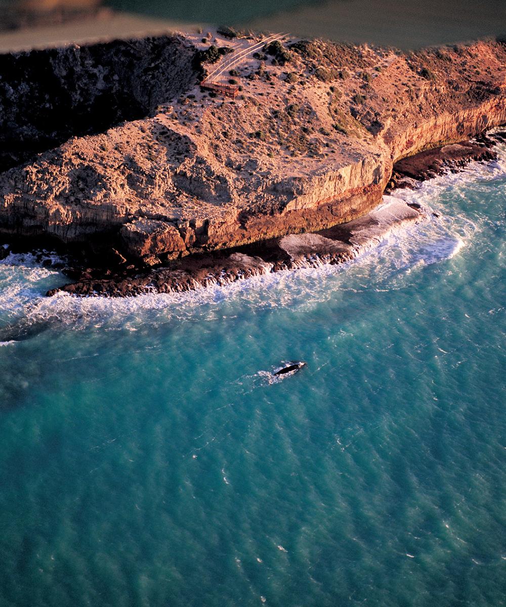 The rugged coastline of the Bunda Cliffs