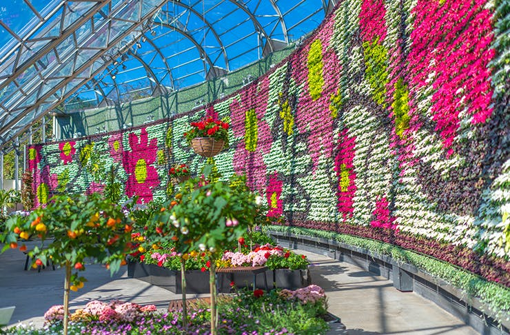 huge plate feature wall at sydney's botanic gardens