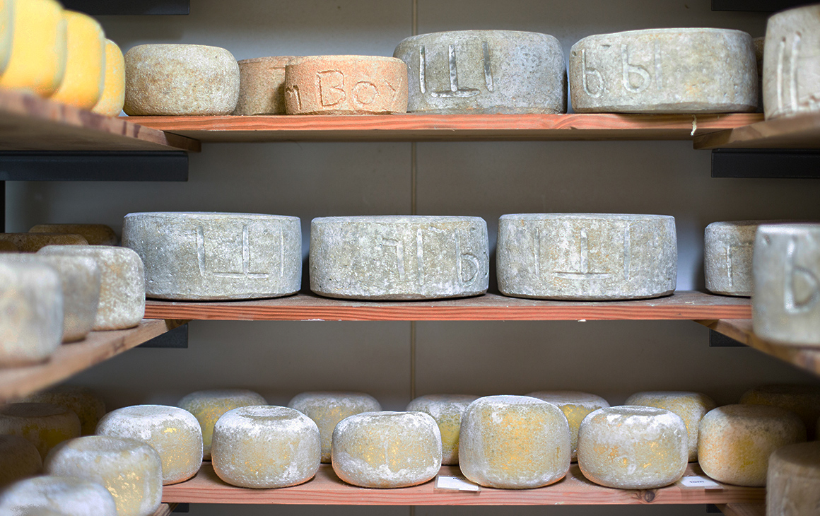 rows of cheese at Bruny Island Cheese Co.