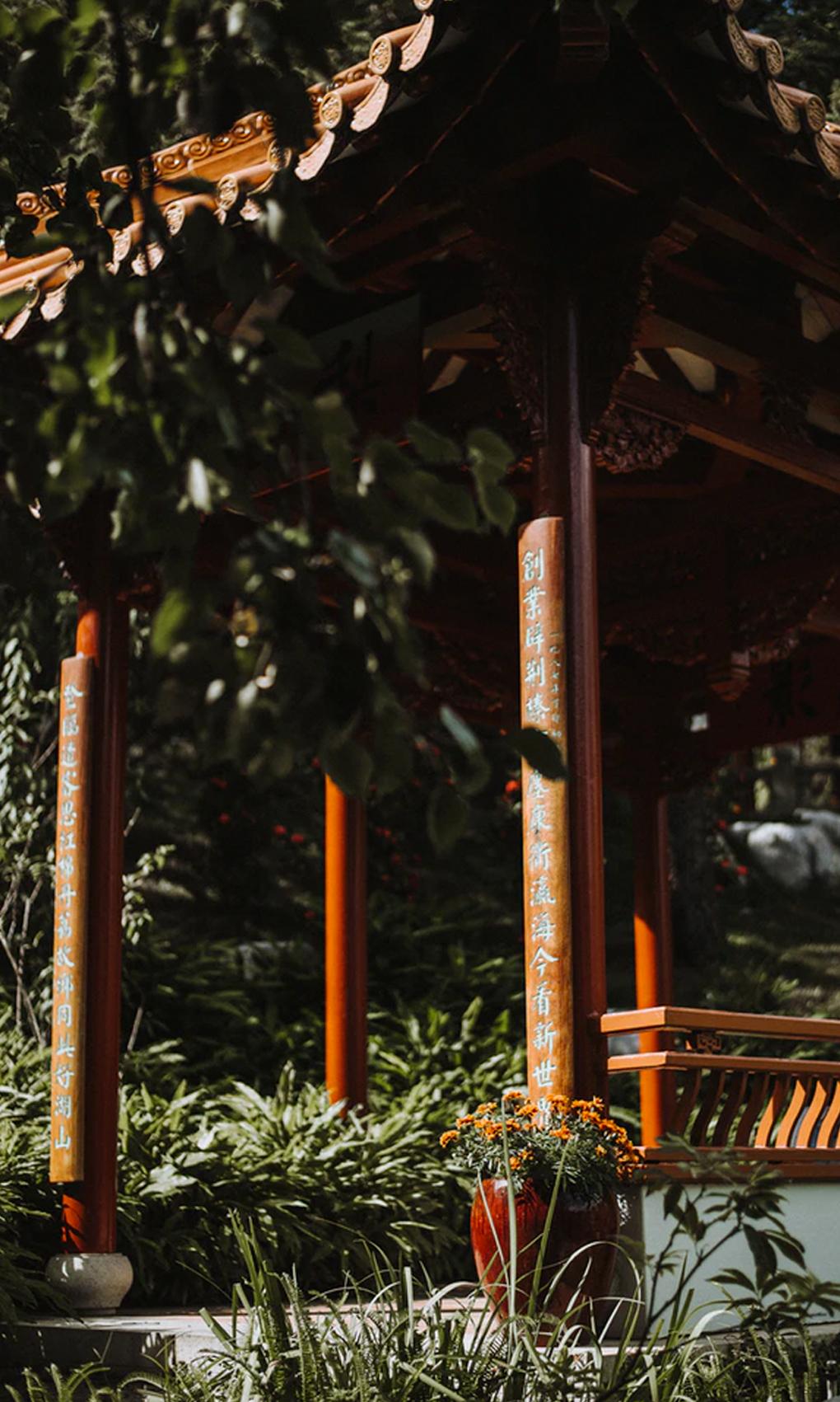 leafy corner of sydney's chinese garden of friendship