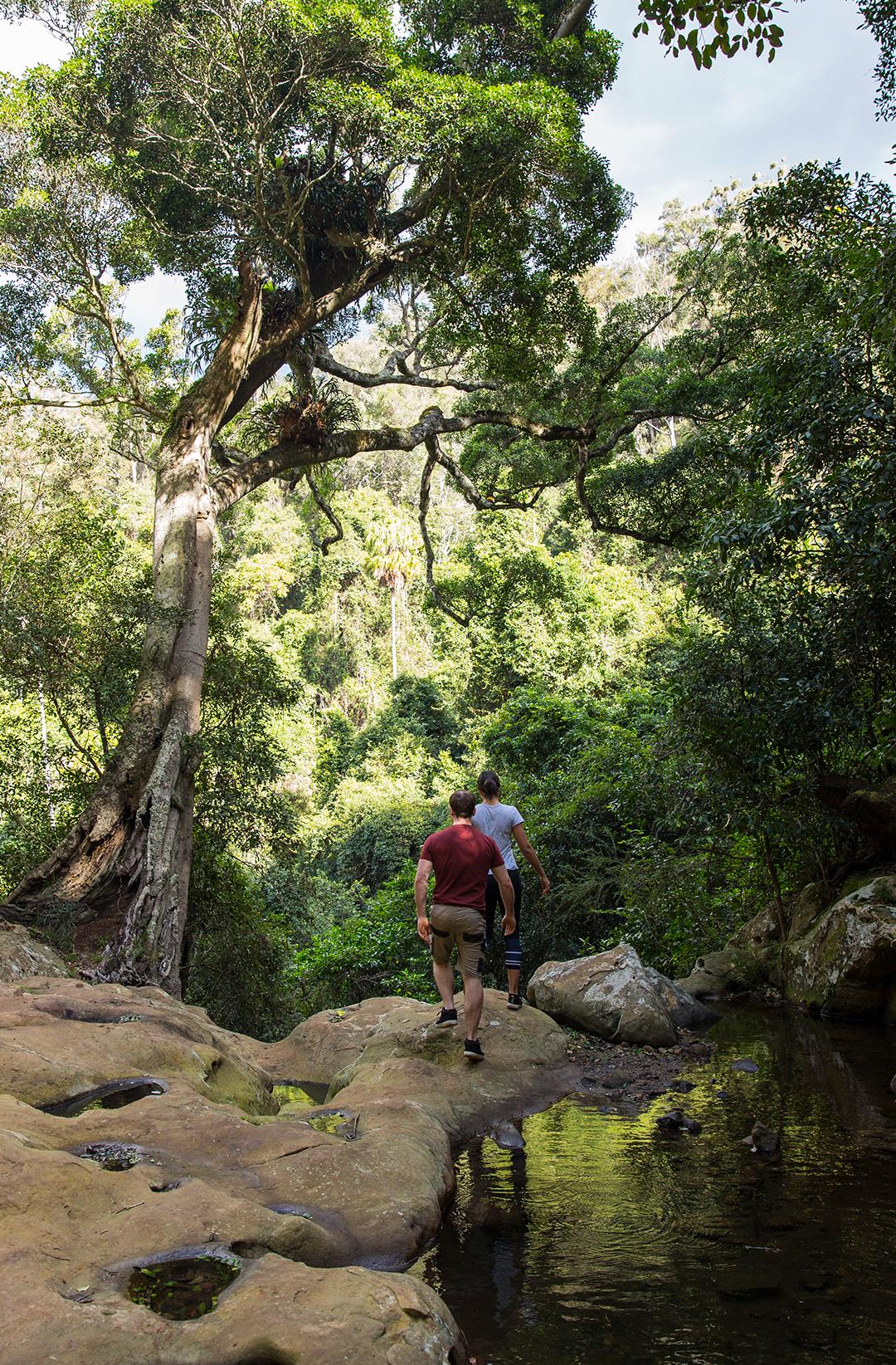 two people on walking track in bush