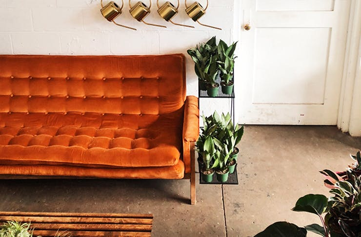 Budget to Blow Out | Couches