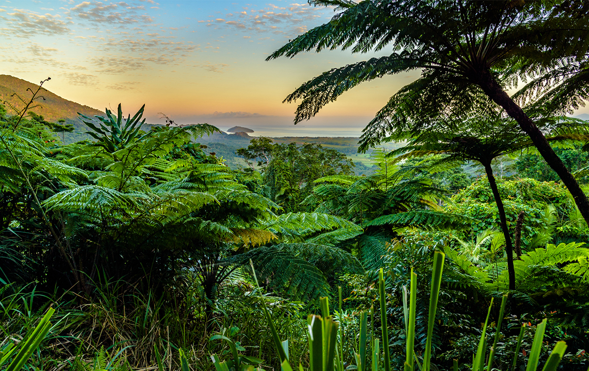 Through clusters of lush, green rainforest is the top of nearby mountains and the ocean in the distance.