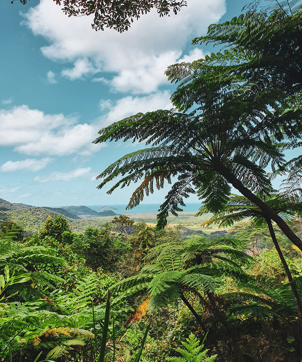 a stunning vista of the lust Daintree rainforest