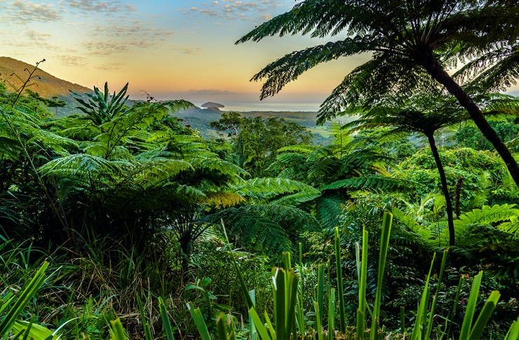 cluster of lush greenery from a look out point in daintree rainforest