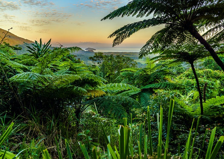 Explore One Of The World's Most Ancient Rainforests On This Dreamy Retreat