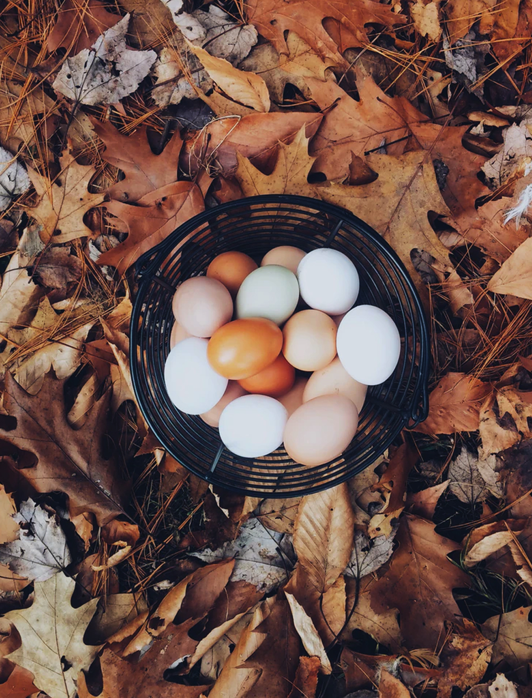 eggs in basket on pile of autumn leaves