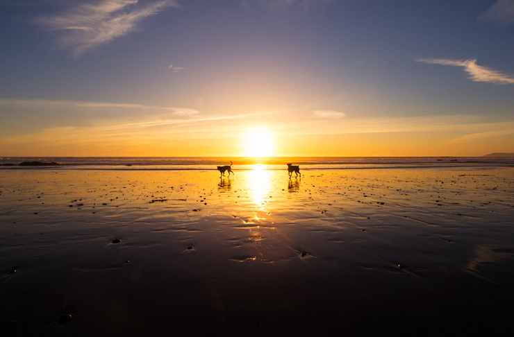 two dogs playing on beach at sunset
