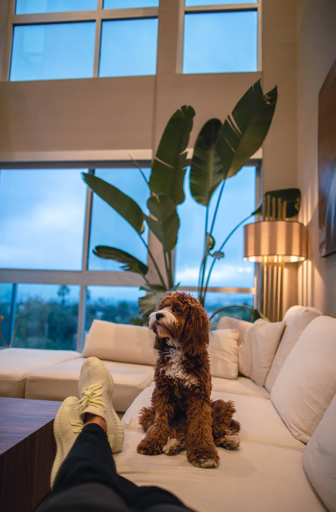 dog sitting on couch in hotel room