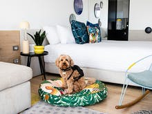 Here's Where To Find The Best Pet-Friendly Accommodation In Australia
