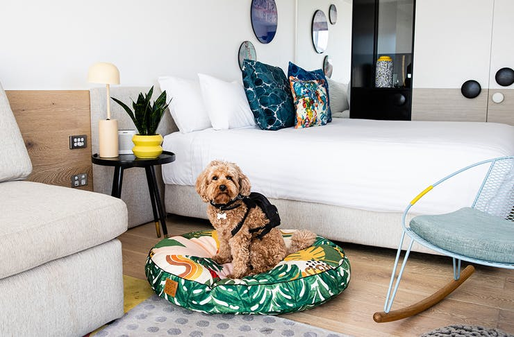 a dog sits on a green dogbed in a hotel room