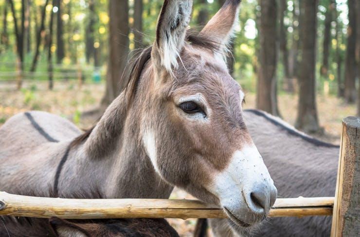 donkey-regional-nsw-wrap
