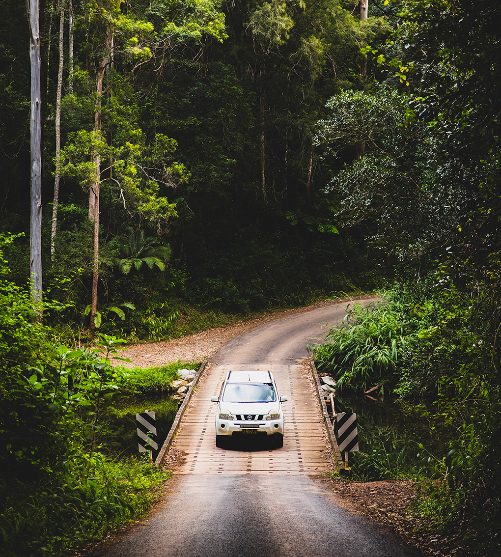 car driving through rainforest